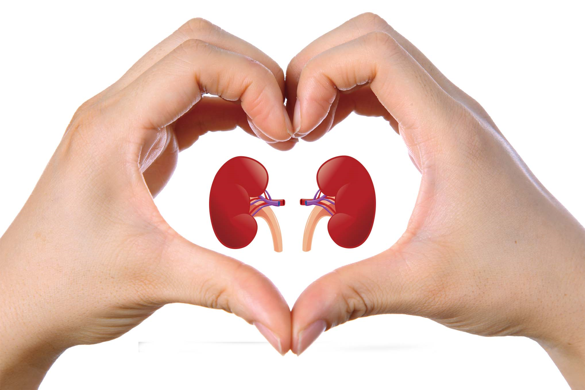 توصیه های غذایی برای کاهش کراتینین خون
